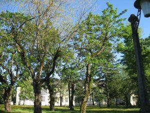 01.09.2018 – Einladung zum fachkundigen Spaziergang: Der Akaziengarten: Großherzogliche Gartenanlage – Garnisonslazarett – verwunschene Parkanlage