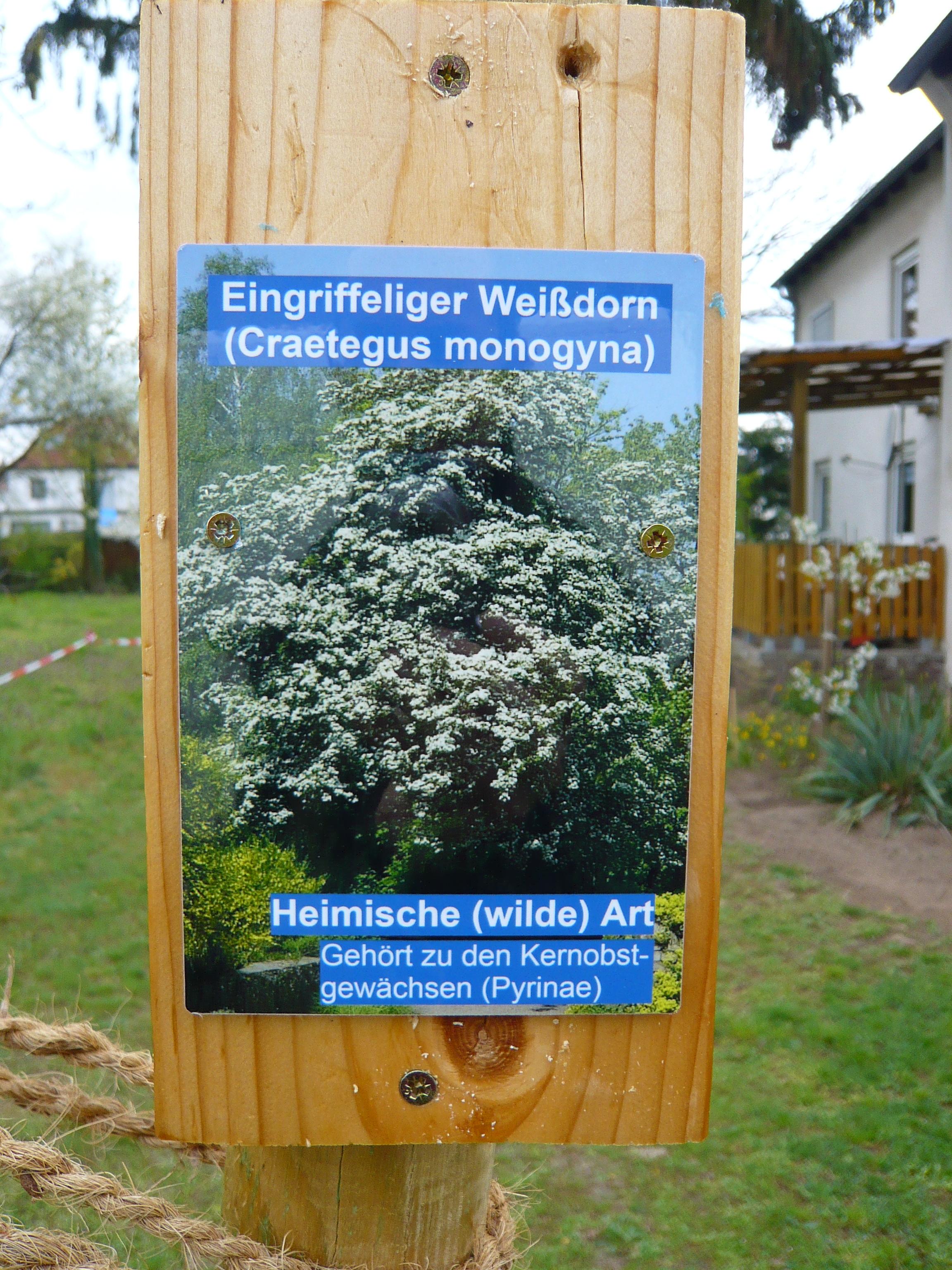 Die sechs wilden Obstbäume der Postsiedlung – jetzt mit naturkundlicher Ausschilderung…