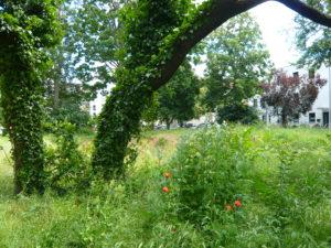 Einblicke in das kommende Biotop Oppenheimer Straße…