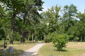 Pro Akaziengarten e.V. lädt ein: Wir feiern die Flatterulme – den Baum des Jahres!