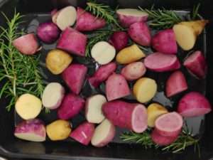Impressionen der Hochbeete-Kartoffelernte vor dem Quartierladen