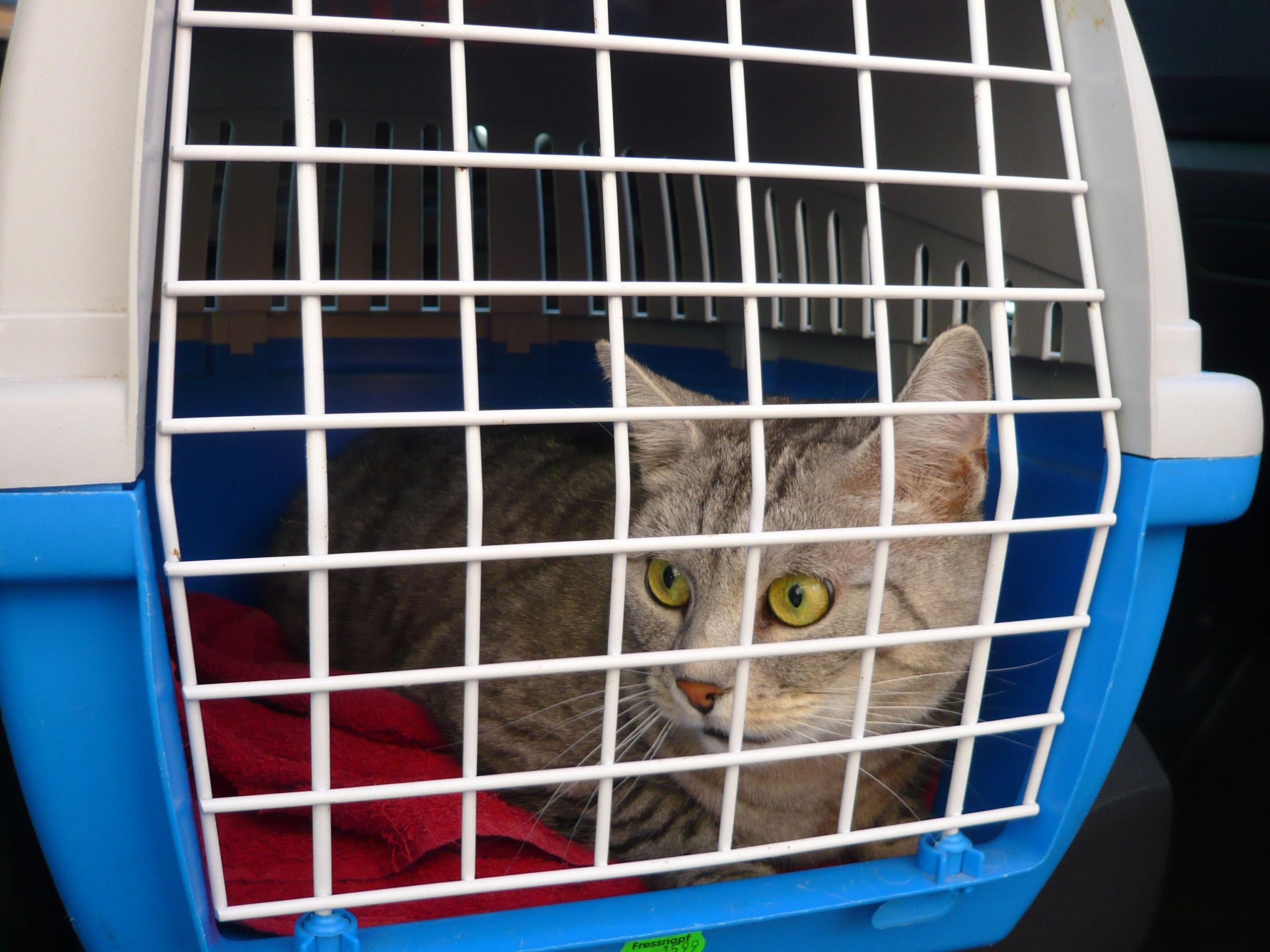 Corona: Kranke Katze, knusprige Pizza und viele Gespräche – Notizen aus der Krisenhilfe