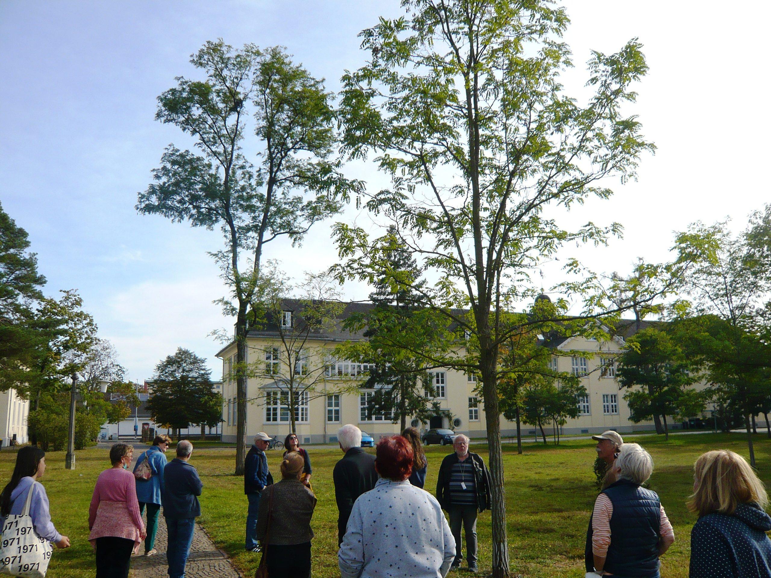 Read more about the article Akaziengarten: Schöner und informativer Rundgang zum Baum des Jahres 2020 – die Robinie